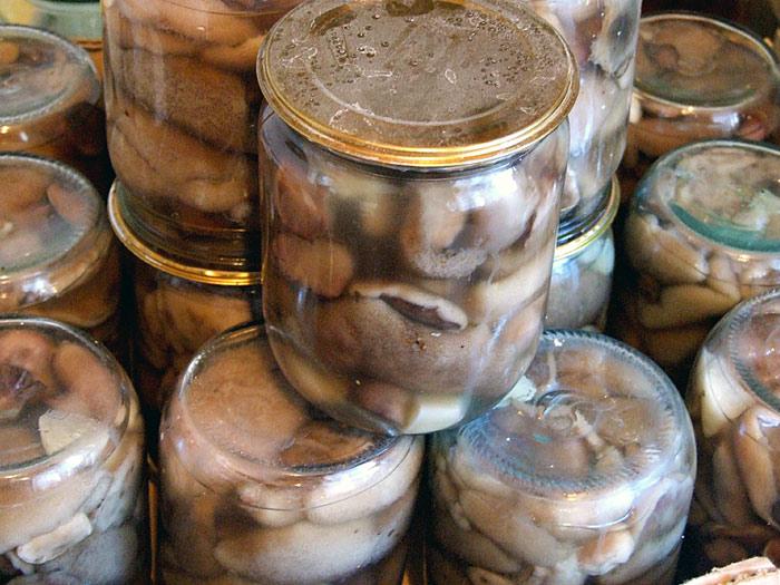 Маринованные грибы маслята фото рецепт